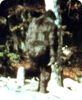 bigfoot_hoax1.jpg
