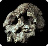 dead_fossil.jpg