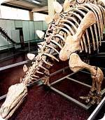 dykebone.jpg