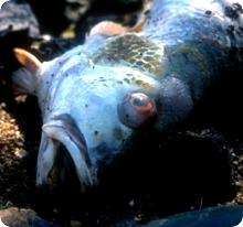 fish_odor0.jpg