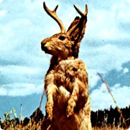 http://x51.org/x/images2005/jackalope_rabbit1.jpg