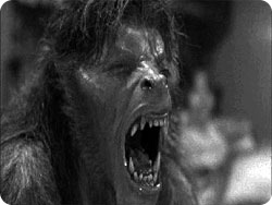 lycanthropy_wolf2.jpg