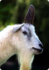unicorn_4.jpg